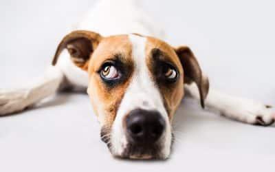 Nos conseils pour garder votre chien en bonne santé