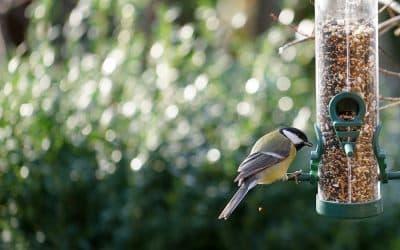 La meilleure alimentation pour votre oiseau