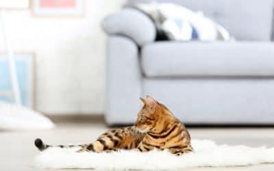Quel chat choisir pour un appartement ?