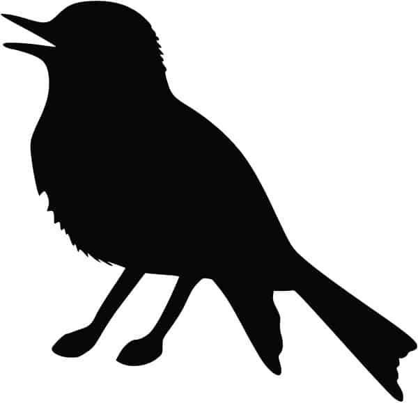 oiseau png