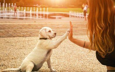 Gérer les problèmes de comportement de son chien
